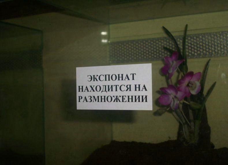 podborka_334_64